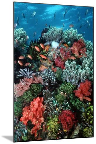 Coral Wall Komodo Marine Park Is World Famous--Mounted Photographic Print
