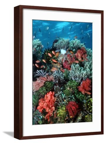 Coral Wall Komodo Marine Park Is World Famous--Framed Art Print