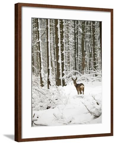 Roe Deer in Snow--Framed Art Print