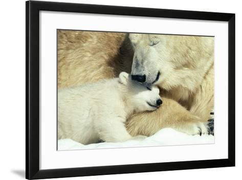 Polar Bear and Cub--Framed Art Print