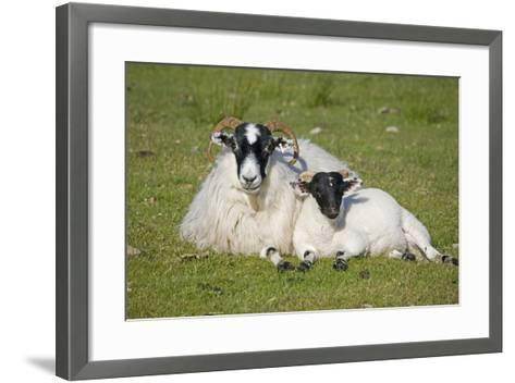 Scottish Black-Faced Ewe and Lamb--Framed Art Print