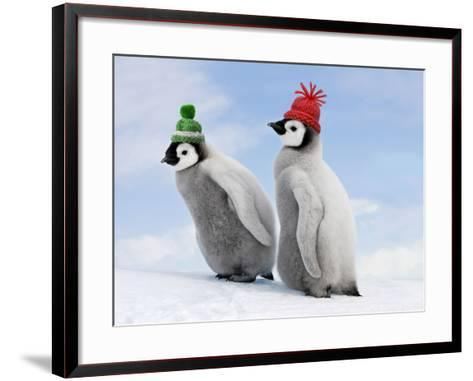 Emperor Penguin, Two Chicks with Woolly Hats--Framed Art Print