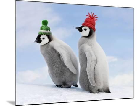 Emperor Penguin, Two Chicks with Woolly Hats--Mounted Photographic Print