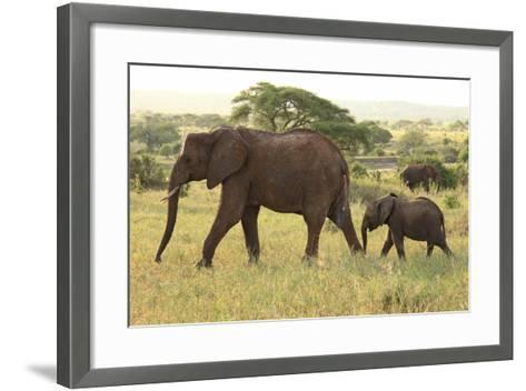 African Savanna Elephant Cow with Calf--Framed Art Print