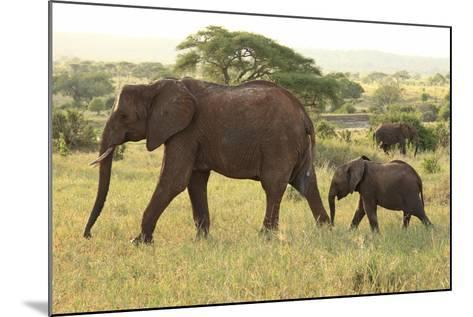 African Savanna Elephant Cow with Calf--Mounted Photographic Print