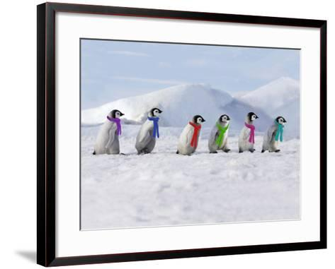 Emperor Penguins, 4 Young Ones Walking in a Line--Framed Art Print