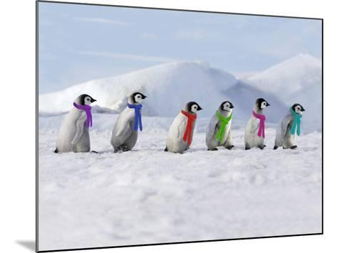 Emperor Penguins, 4 Young Ones Walking in a Line--Mounted Photographic Print