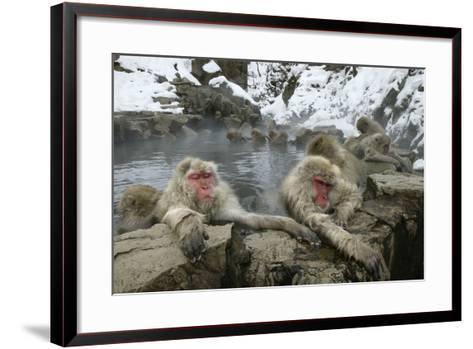 Snow Monkeys--Framed Art Print