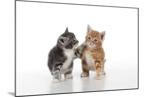 Ginger and Grey Tabby Kittens Playing--Mounted Photographic Print