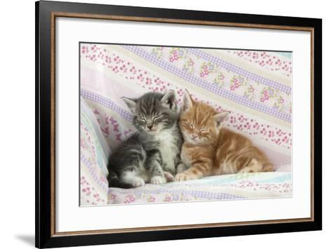 Ginger and Grey Tabby Kittens Sleeping--Framed Art Print