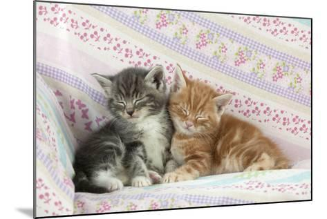 Ginger and Grey Tabby Kittens Sleeping--Mounted Photographic Print