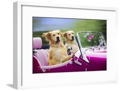 Golden Retriever Dog, Two Valentine Dog Couple in Car--Framed Art Print