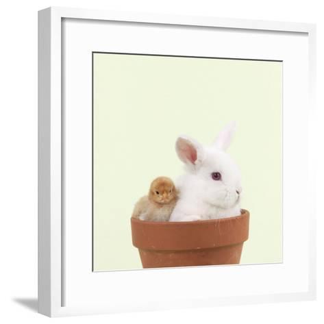 Rabbit and Chick Mini Ivory Satin Rabbit Sitting--Framed Art Print
