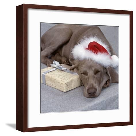 Weimaraner Asleep Wearing Christmas Hat--Framed Art Print