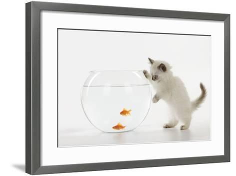 Kitten Watching Fish in Fish Bowl--Framed Art Print
