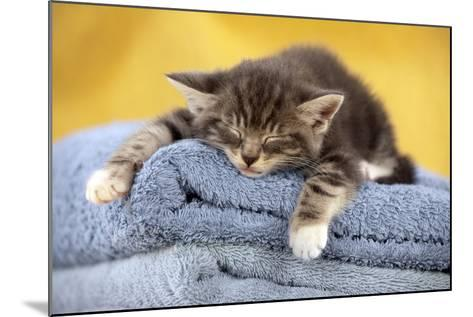 Kitten Sleeping on Towels--Mounted Photographic Print