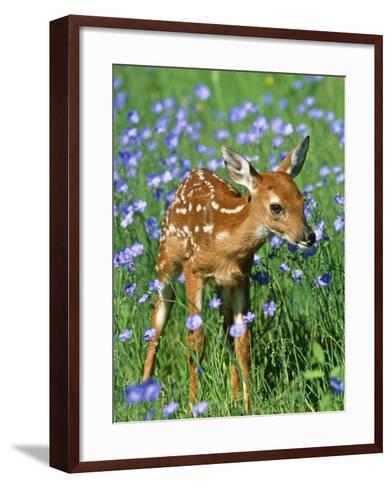 White-Tailed Deer Fawn--Framed Art Print