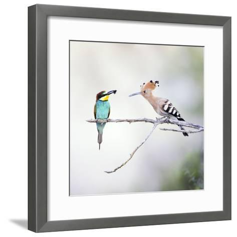 European Bee Eater Perched with a Honey Bee--Framed Art Print