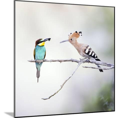 European Bee Eater Perched with a Honey Bee--Mounted Photographic Print