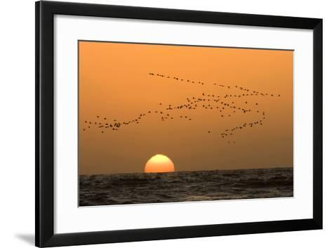 Flamingo Flock in Flight at Sunset over the Atlantic--Framed Art Print