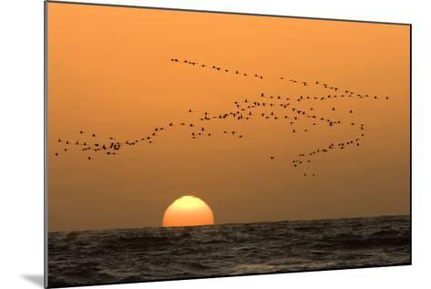 Flamingo Flock in Flight at Sunset over the Atlantic--Mounted Photographic Print