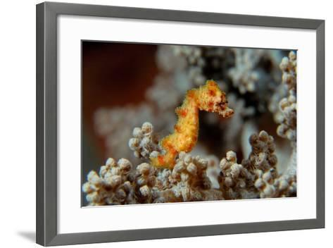 Pygmy Seahorse This Is a New Kind of Pigmy Seahorse--Framed Art Print