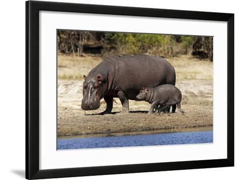 Hippo Mother with Young One--Framed Art Print