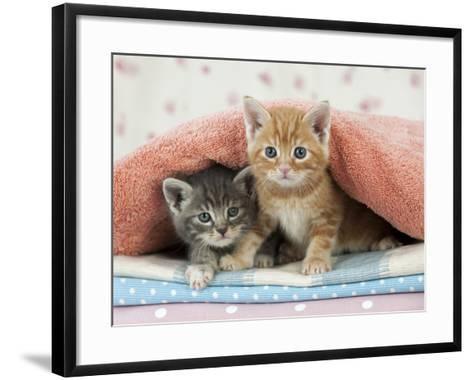 Ginger and Grey Tabby Kittens--Framed Art Print