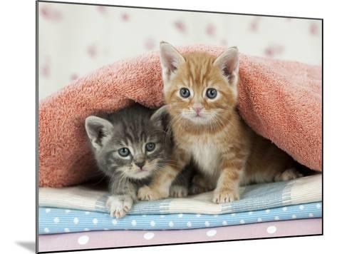 Ginger and Grey Tabby Kittens--Mounted Photographic Print