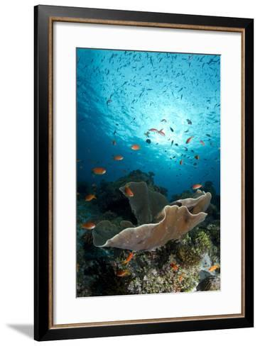 Cup Coral and Scalefin Anthias--Framed Art Print