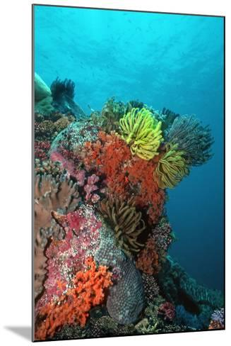 Coral Reef Underwater Scene of Coral Reef--Mounted Photographic Print