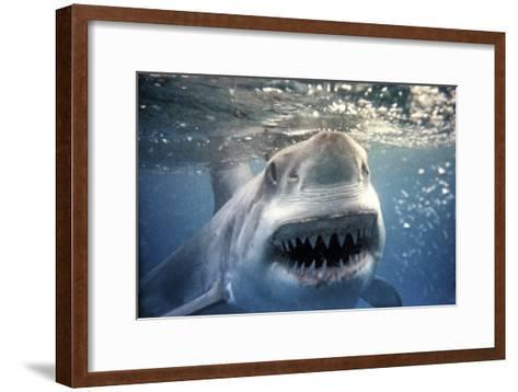 Great White Pointer Shark--Framed Art Print