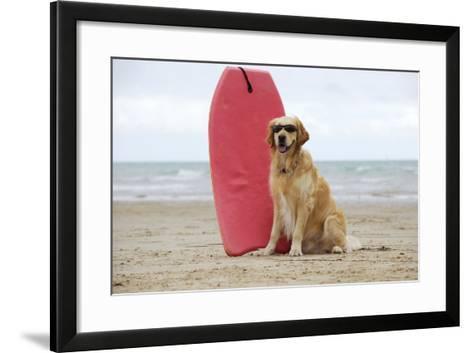Golden Retriever Wearing Sunglasses Next to Surf Board--Framed Art Print