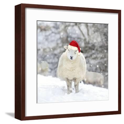 Sheep Texel Ewe in Snow Wearing Christmas Hat--Framed Art Print