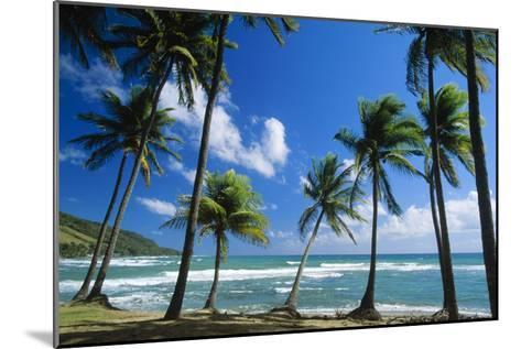 Coconut Palm Palm Trees Along Shoreline--Mounted Photographic Print