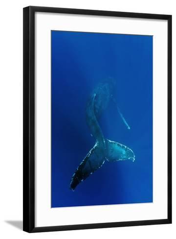 Humpback Whale Underwater--Framed Art Print