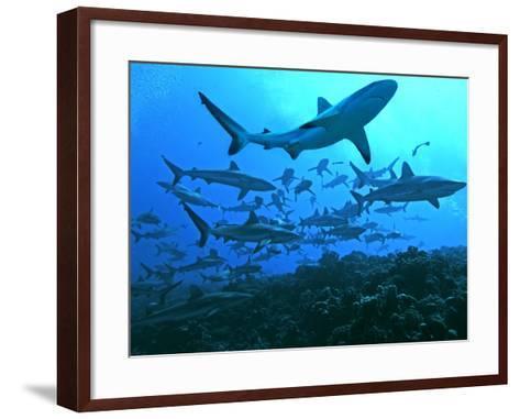 Grey Reef Sharks Swimming into the Fakarava Lagoon--Framed Art Print
