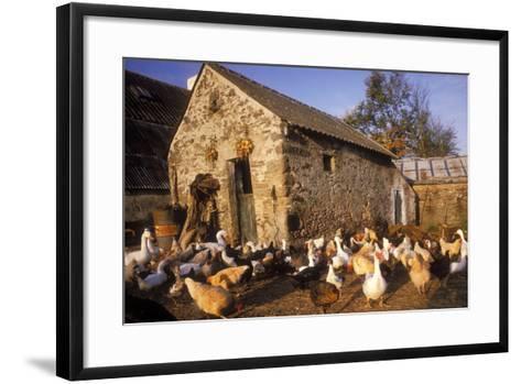 France Farmyard with Chickens--Framed Art Print