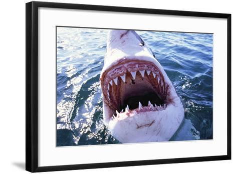 Great White Pointer Shark--Framed Art Print