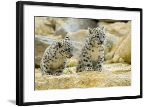 Snow Leopards Cubs--Framed Art Print