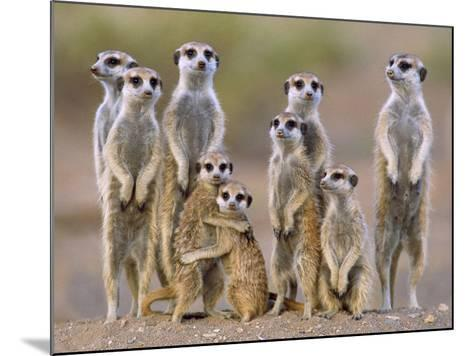 Meerkat Family with Young on the Lookout--Mounted Photographic Print