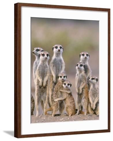 Meerkat Family with Young on the Lookout--Framed Art Print