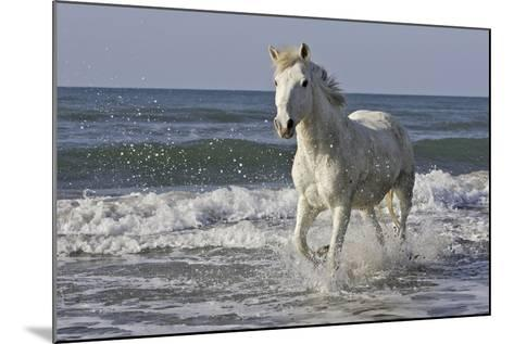 Camargue Horse Running Along the Beach--Mounted Photographic Print