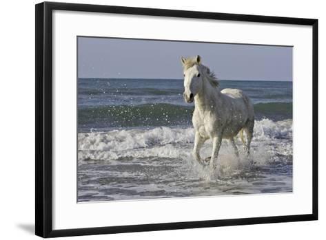 Camargue Horse Running Along the Beach--Framed Art Print