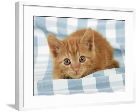 Ginger Kitten on Blue Gingham--Framed Art Print