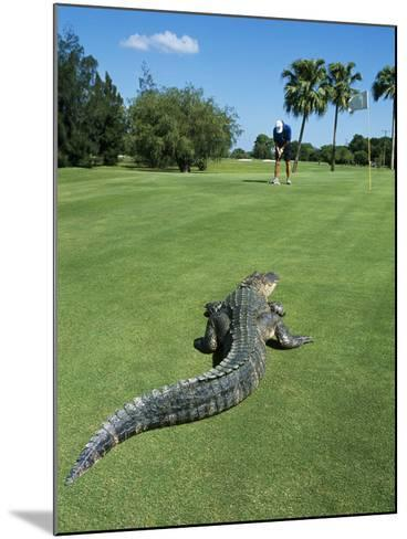 American Alligator on Golf Course--Mounted Photographic Print