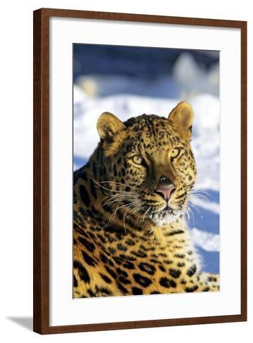 Korean Leopard--Framed Art Print