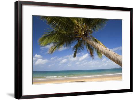 Coconut Palm--Framed Art Print