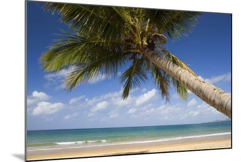 Coconut Palm--Mounted Photographic Print