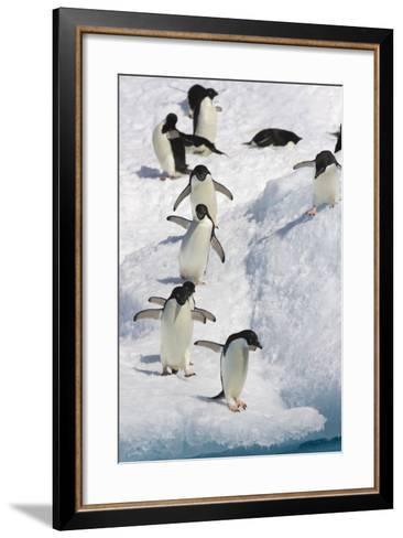 Adelie Penguin on Iceberg--Framed Art Print